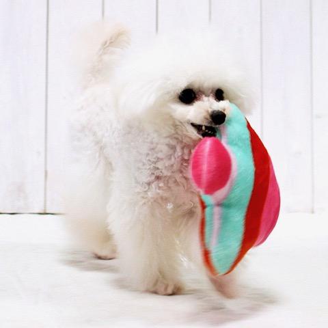 iDog&iCat アイドッグアイキャット iToy 国産ペット用おもちゃ POPな柄のキノコ型おもちゃ カシャカシャ入りでワンコも夢中に 東京 フントヒュッテ 画像 犬用おもちゃ _ 10.jpg