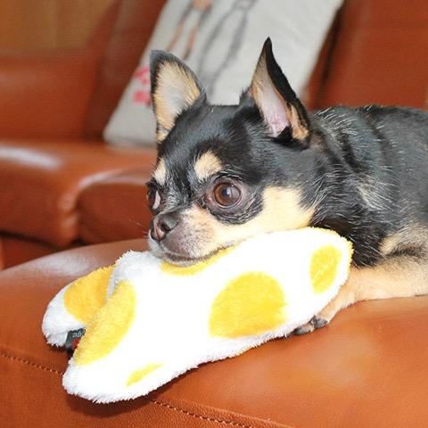 iDog&iCat アイドッグアイキャット iToy 国産ペット用おもちゃ POPな柄のキノコ型おもちゃ カシャカシャ入りでワンコも夢中に 東京 フントヒュッテ 画像 犬用おもちゃ _ 17.jpg