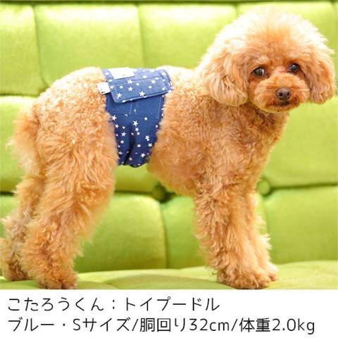 iDog&iCat アイドッグアイキャット マナーベルト スターボーダー 東京 フントヒュッテ 画像 犬 マナーバンド マーキング防止 _ 6.jpg