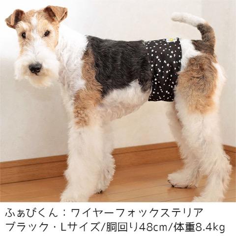 iDog&iCat アイドッグアイキャット マナーベルト スターボーダー 東京 フントヒュッテ 画像 犬 マナーバンド マーキング防止 _ 11.jpg