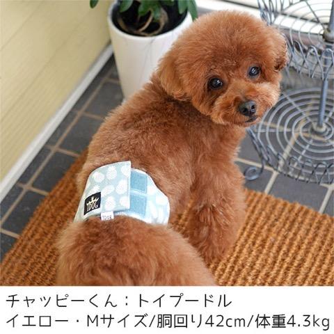 iDog&iCat アイドッグアイキャット マナーベルト パインボーダー 東京 フントヒュッテ 画像 犬 マナーバンド マーキング防止 パイナップル柄 _ 7.jpg