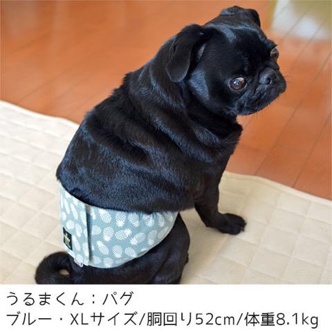 iDog&iCat アイドッグアイキャット マナーベルト パインボーダー 東京 フントヒュッテ 画像 犬 マナーバンド マーキング防止 パイナップル柄 _ 8.jpg