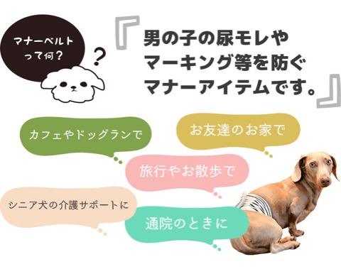 iDog&iCat アイドッグアイキャット マナーベルト パインボーダー 東京 フントヒュッテ 画像 犬 マナーバンド マーキング防止 パイナップル柄 _ 9.jpg