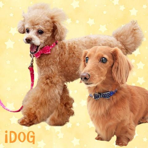 犬 首輪 リード iDog アイドッグ リード・カラーセット ランダムスター×スターリボン #犬 #首輪 #リード #iDog #アイドッグ リード・カラーセット ランダムスター×スターリボン _ 1.jpg
