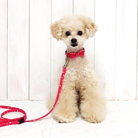 犬 首輪 リード iDog アイドッグ リード・カラーセット ランダムスター×スターリボン #犬 #首輪 #リード #iDog #アイドッグ リード・カラーセット ランダムスター×スターリボン _ 5.jpg