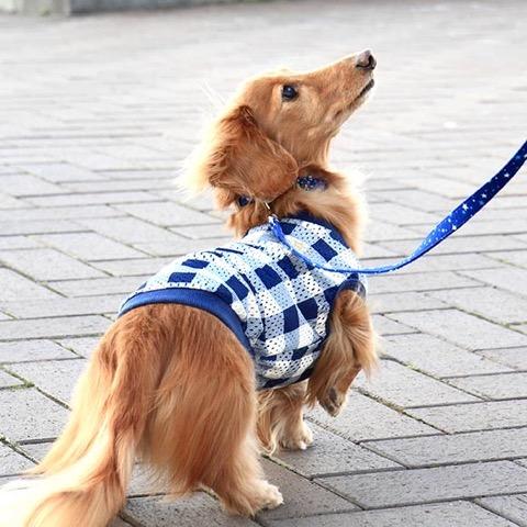 犬 首輪 リード iDog アイドッグ リード・カラーセット ランダムスター×スターリボン #犬 #首輪 #リード #iDog #アイドッグ リード・カラーセット ランダムスター×スターリボン _ 7.jpg