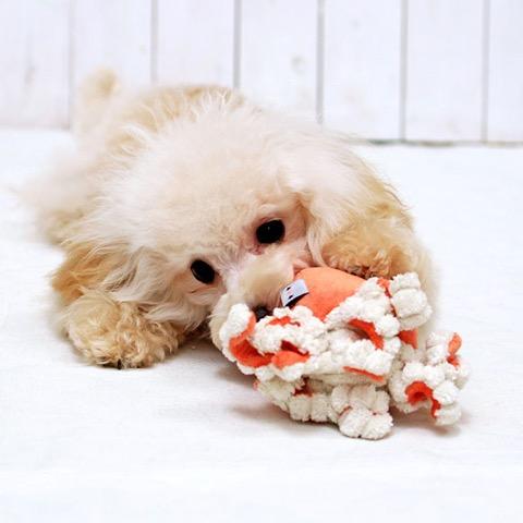 iDog&iCat アイドッグアイキャット iToy ペット用布製おもちゃ 画像 犬用おもちゃ にょろにょろタコさん _ 9.jpg