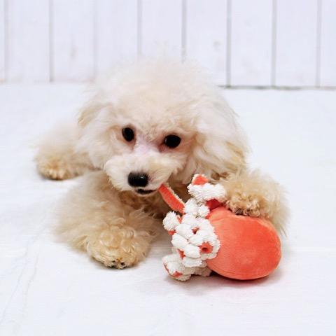 iDog&iCat アイドッグアイキャット iToy ペット用布製おもちゃ 画像 犬用おもちゃ にょろにょろタコさん _ 10.jpg