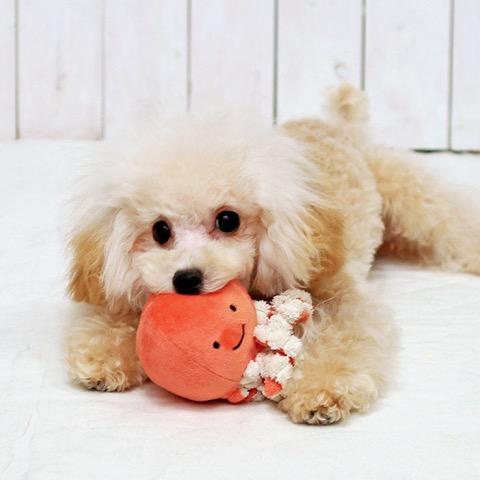 iDog&iCat アイドッグアイキャット iToy ペット用布製おもちゃ 画像 犬用おもちゃ にょろにょろタコさん _ 11.jpg