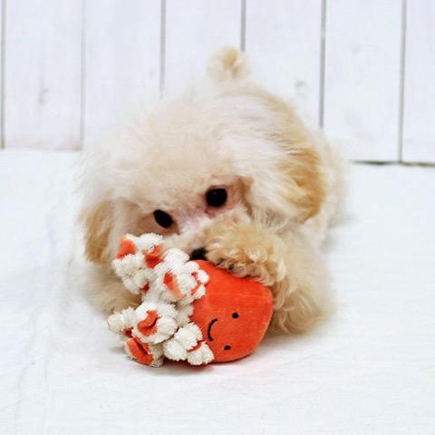 iDog&iCat アイドッグアイキャット iToy ペット用布製おもちゃ 画像 犬用おもちゃ にょろにょろタコさん _ 12.jpg