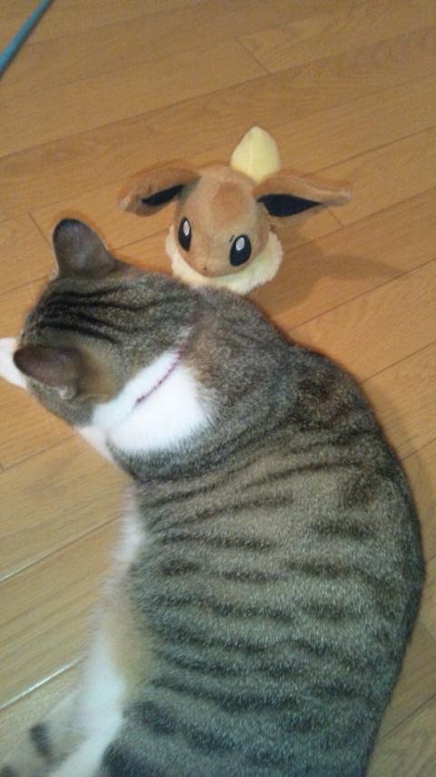猫とブイちゃん131007_212632.jpg