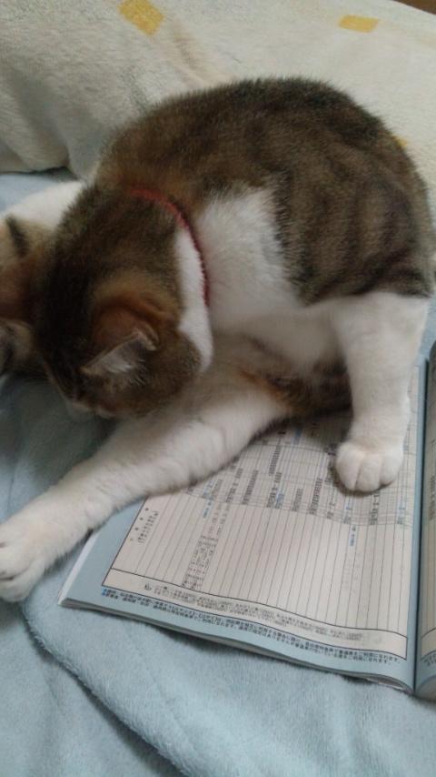 140505_154307時刻表妨害猫.jpg