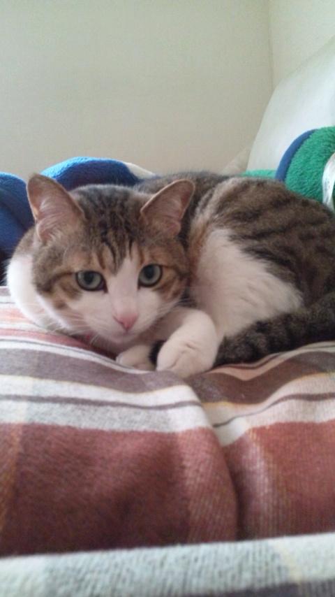 160421_145903テト猫誕生日2016年.jpg