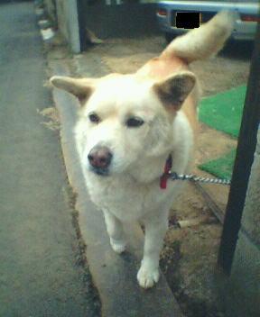最近旅立った愛犬のロイです