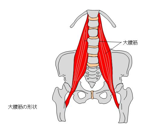 十坪ジム QOMジム 動きのトレーニング 腸腰筋のケガ なかなか治らない腰痛