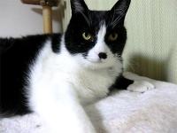 サンクリーン宇都宮の看板ネコ達のご紹介。