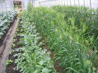 春の畑の様子です。隙間なくたくさん野菜を育てています。