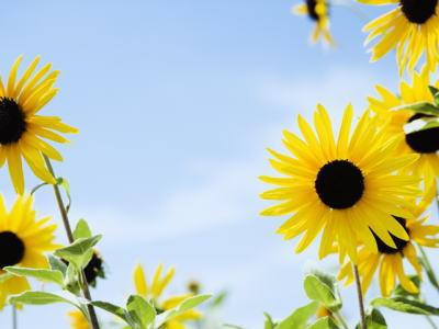 色取り豊かな花