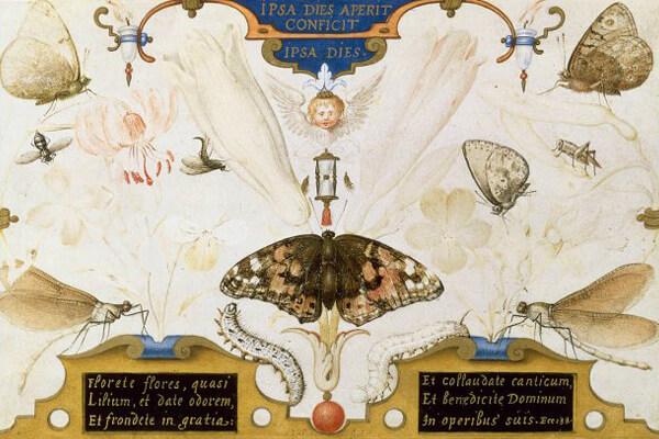 ヨーリス・フーフナーヘル《人生の短さの寓意(花と昆虫のいる二連画)》