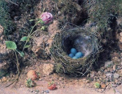 ウィリアム・ヘンリー・ハント《ヨーロッパカヤクグリ(イワヒバリ属)の巣》