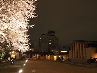 自由学園明日館の夜桜見学会