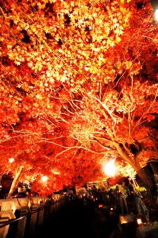 神奈川 夜景