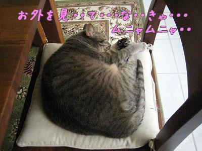 リン 窓辺昼寝