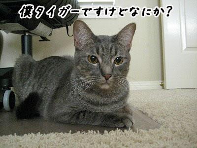 TIGER紹介