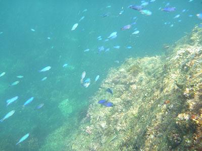 青い魚たち