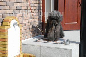 青空計画(あおぞら計画)チョ子 ペット共生住宅の説明 ペット同居のための足洗い場 紐かけ