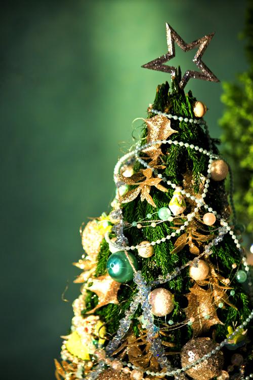 クリスマスツリー画像 樅の木