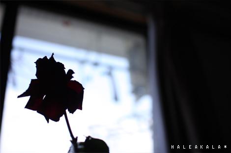 バラシルエット。
