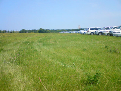 草原・・・。w 草原としてなら綺麗なのかも・・・。