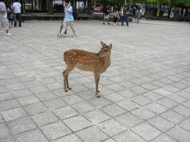 広島 宮島 10