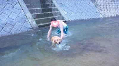 ミルキィー泳ぐ