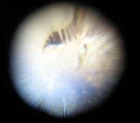 ボールレンズの顕微鏡