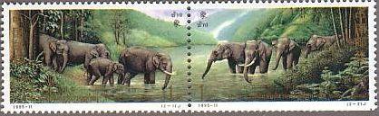 アラカルト 象