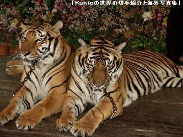 タイの動物