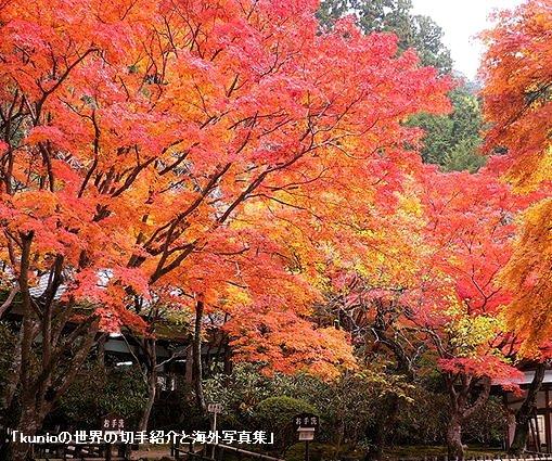 奈良・女人高野・室生寺の紅葉(2010年)