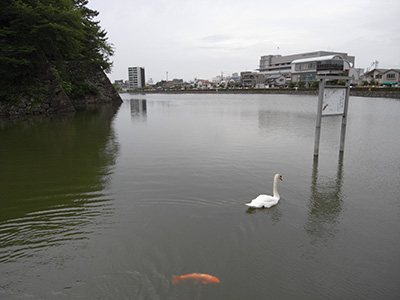 名古屋城 北 お堀