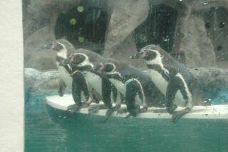 ホテルのペンギン