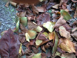 秋を感じる落ち葉