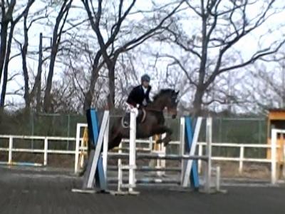 秋田 馬術 競技会 乗馬 大会