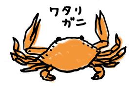 ワタリガニ.jpg