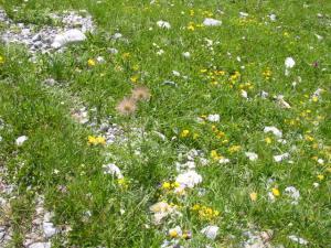 スイスの花畑