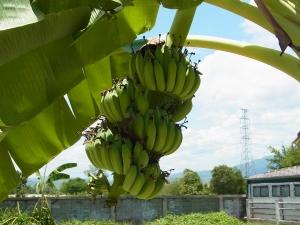 バナナ&ライム1.jpg