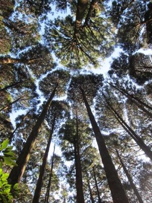 佐喜浜ツアー杉の天井