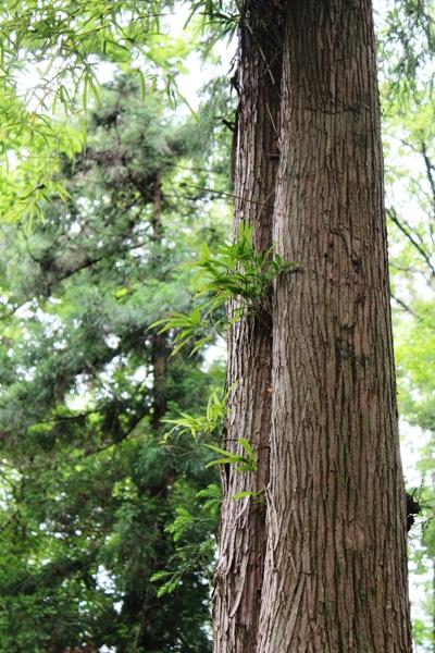 24樹木医セミナー0520-3