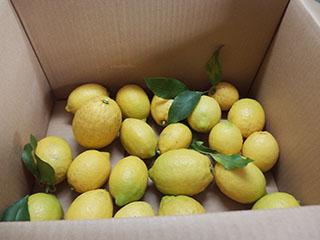 レモン2001
