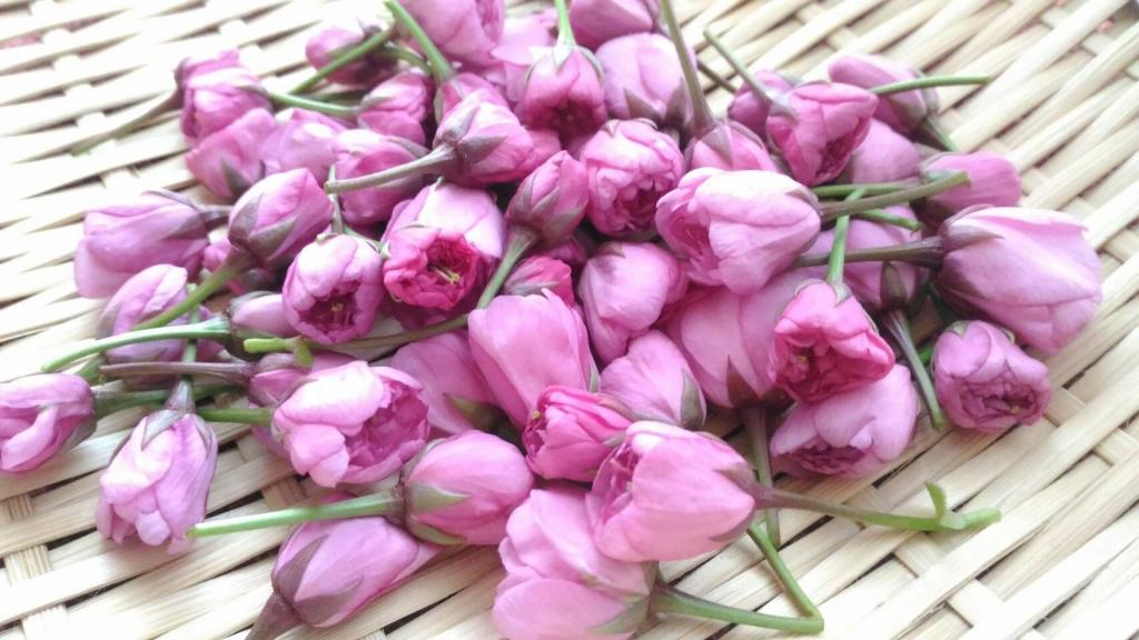 薬膳「桜」